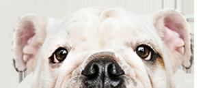 Johnson Ranch Animal Clinic Reviews