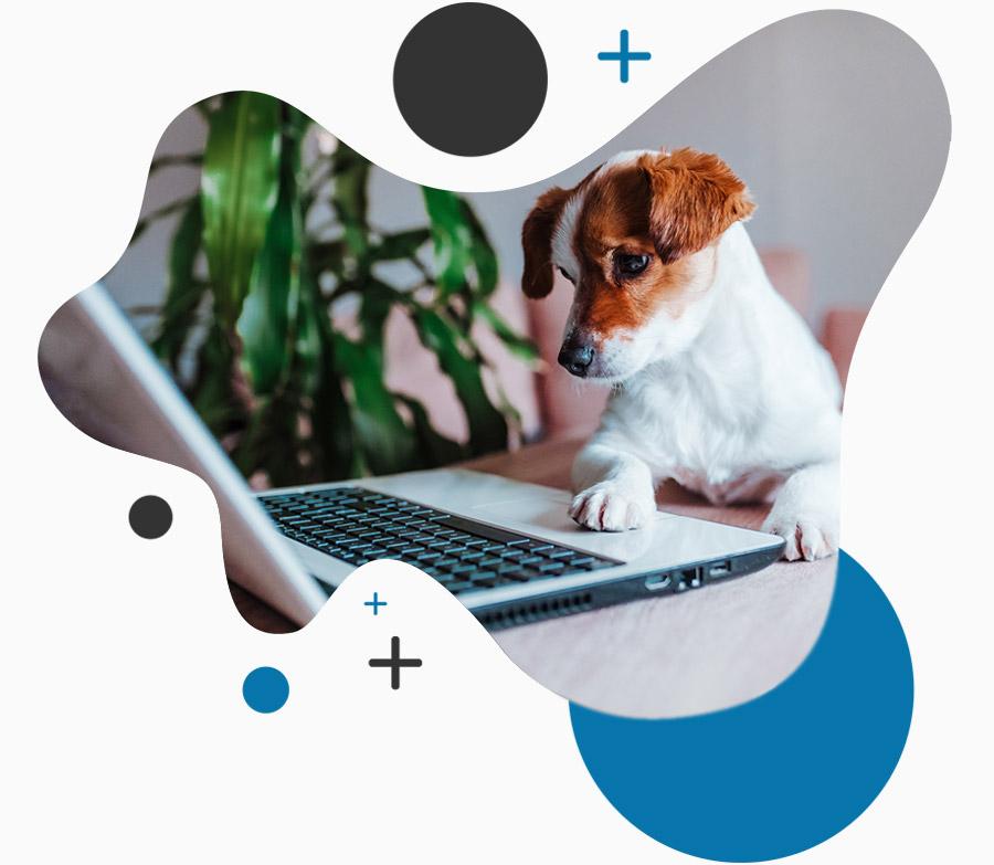 Veterinary Virtual Visits
