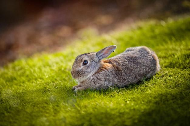 Rabbit Vet